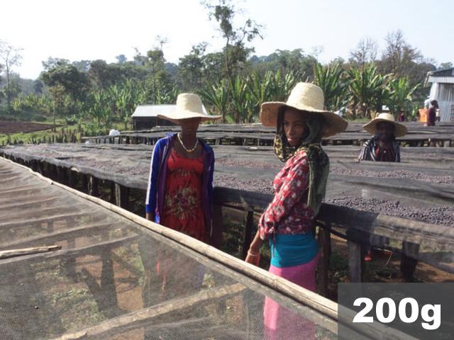 エチオピア   シェカ カヨカミノ農園 ナチュラル   コーヒー豆200g