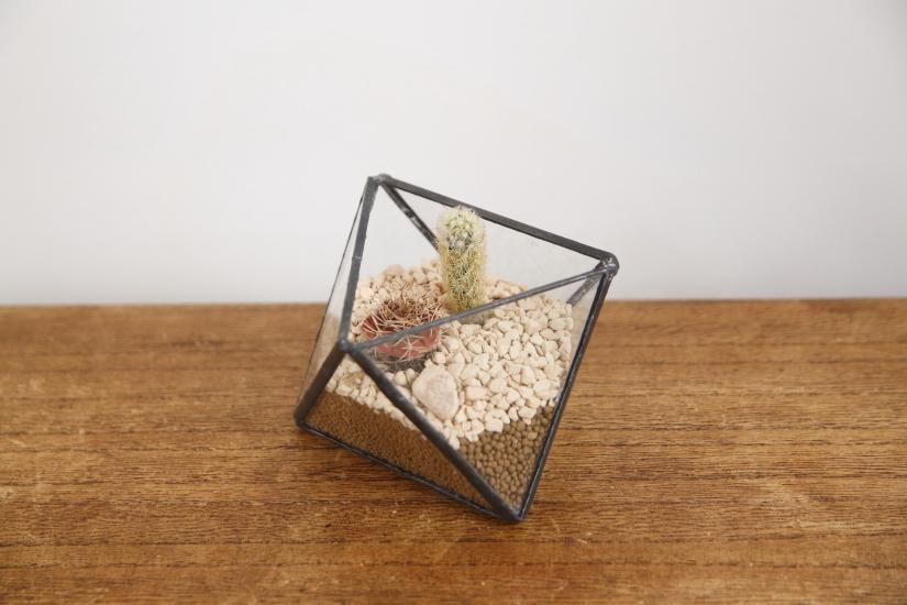 多角形 ガラス テラリウム 【送料無料】
