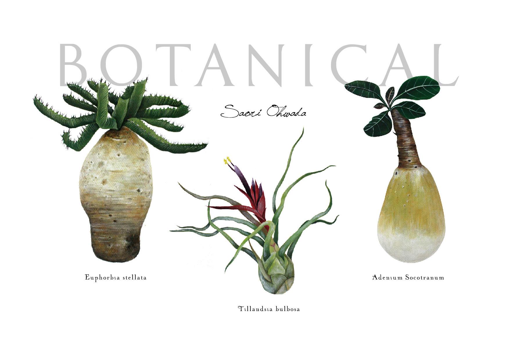 Botanical 3種 ポストカード