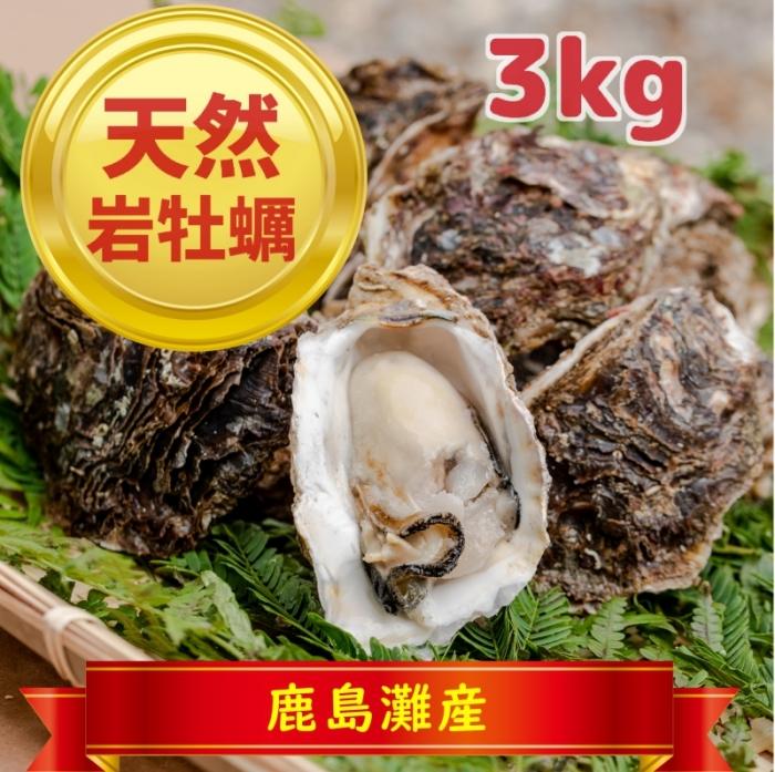 天然岩牡蠣3kg(鹿島灘産)【季節限定:おおよそ6月~9月まで】