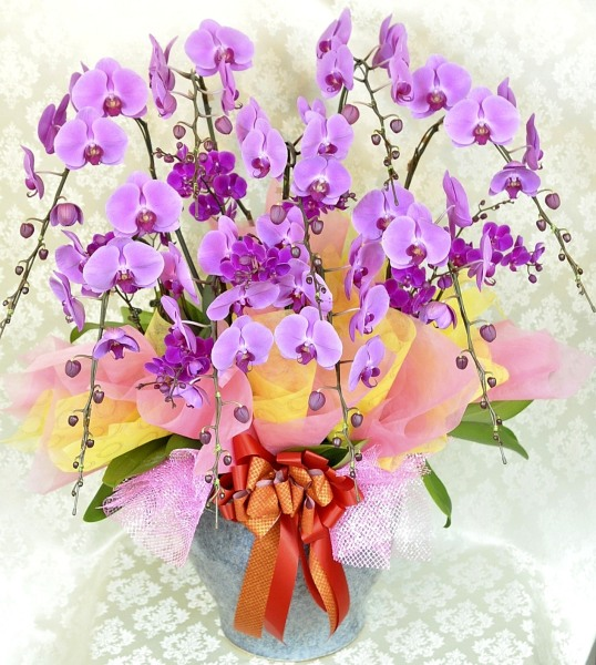 贈答品御祝い胡蝶蘭