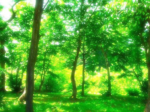 大阪瞑想会6月16日