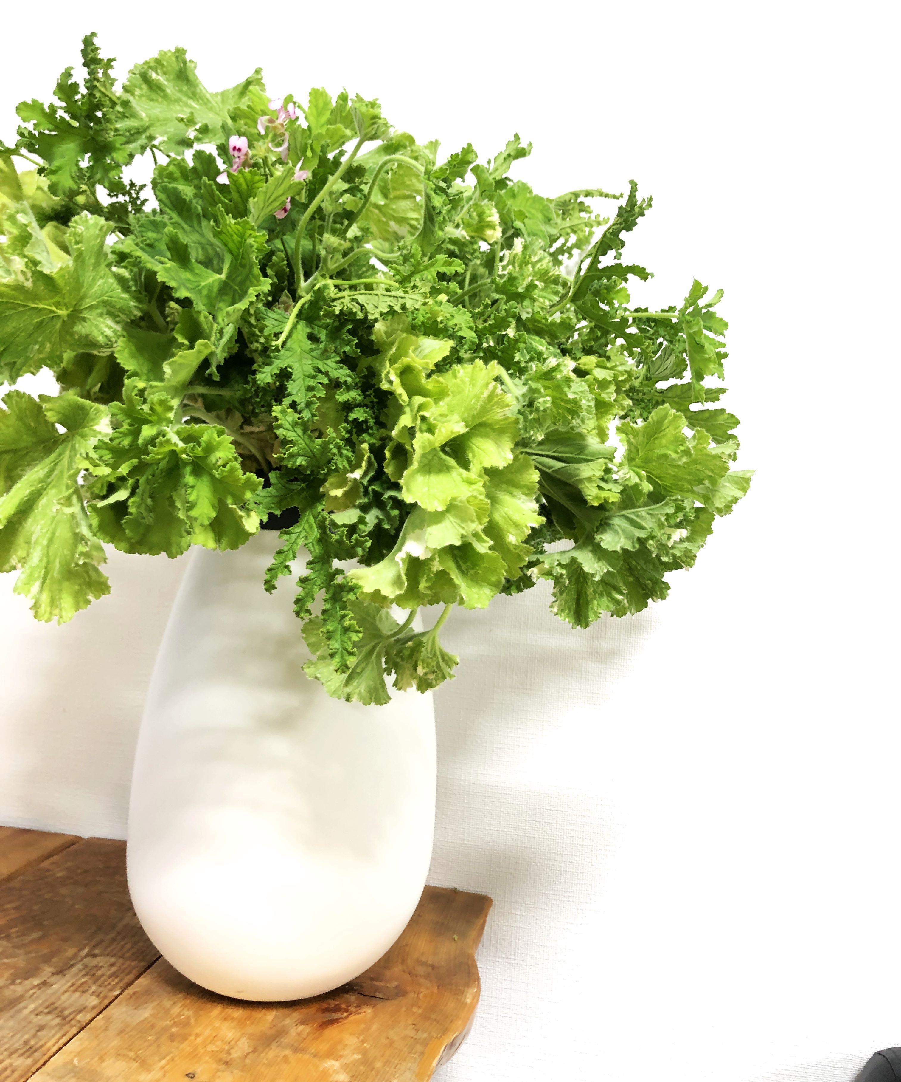 4種類のゼラニュームミックス 癒しの香りハーブグリーンブーケ 20本 送料無料
