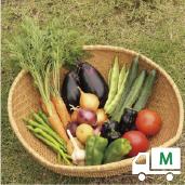 定期便*月1回お届け3ヶ月コース【M】季節のお野菜おまかせボックスMサイズ