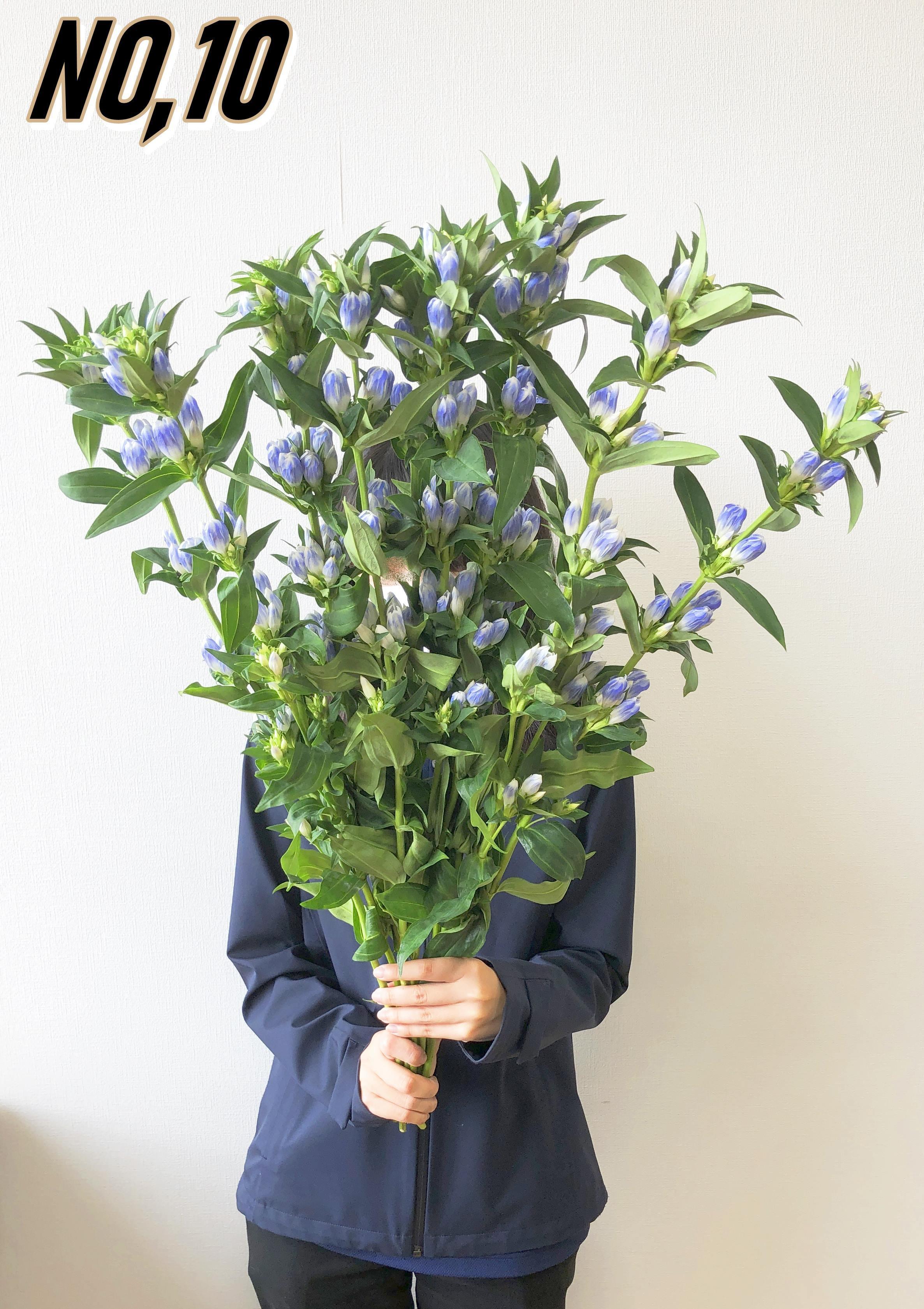 ★送料無料 お墓参りへ行こう!国産お供え花シェアBOX30 №3【ロスフラワー救済!】