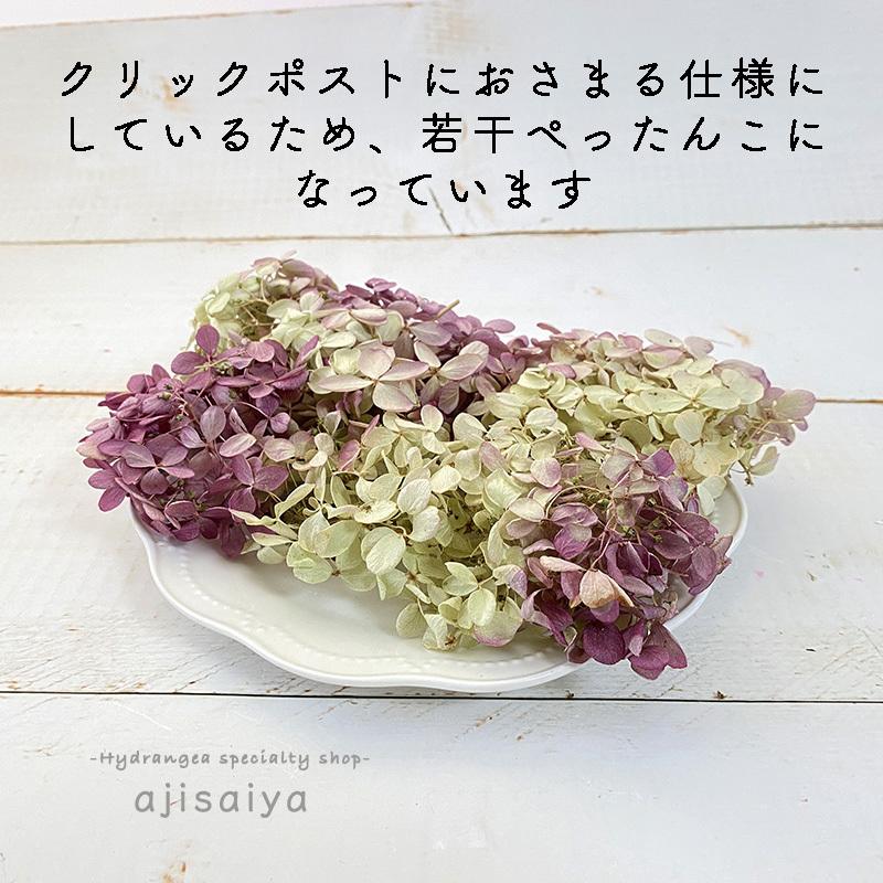 北海道産 秋色みなづきあじさい小輪パック ドライフラワー <アジサイ・紫陽花>