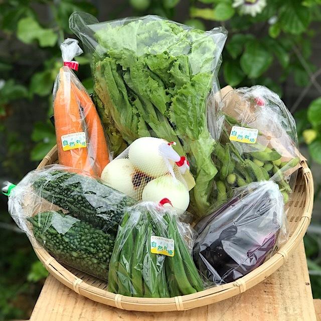 季節のお野菜セット Mセット 【1~2人】7品 送料無料