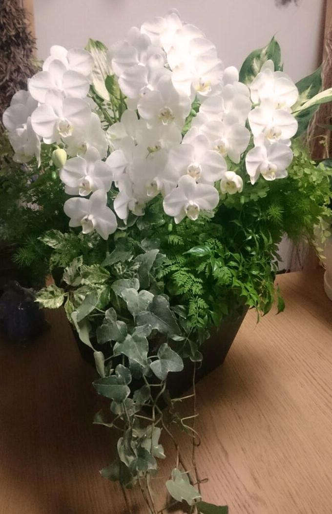 胡蝶蘭の寄せ植え