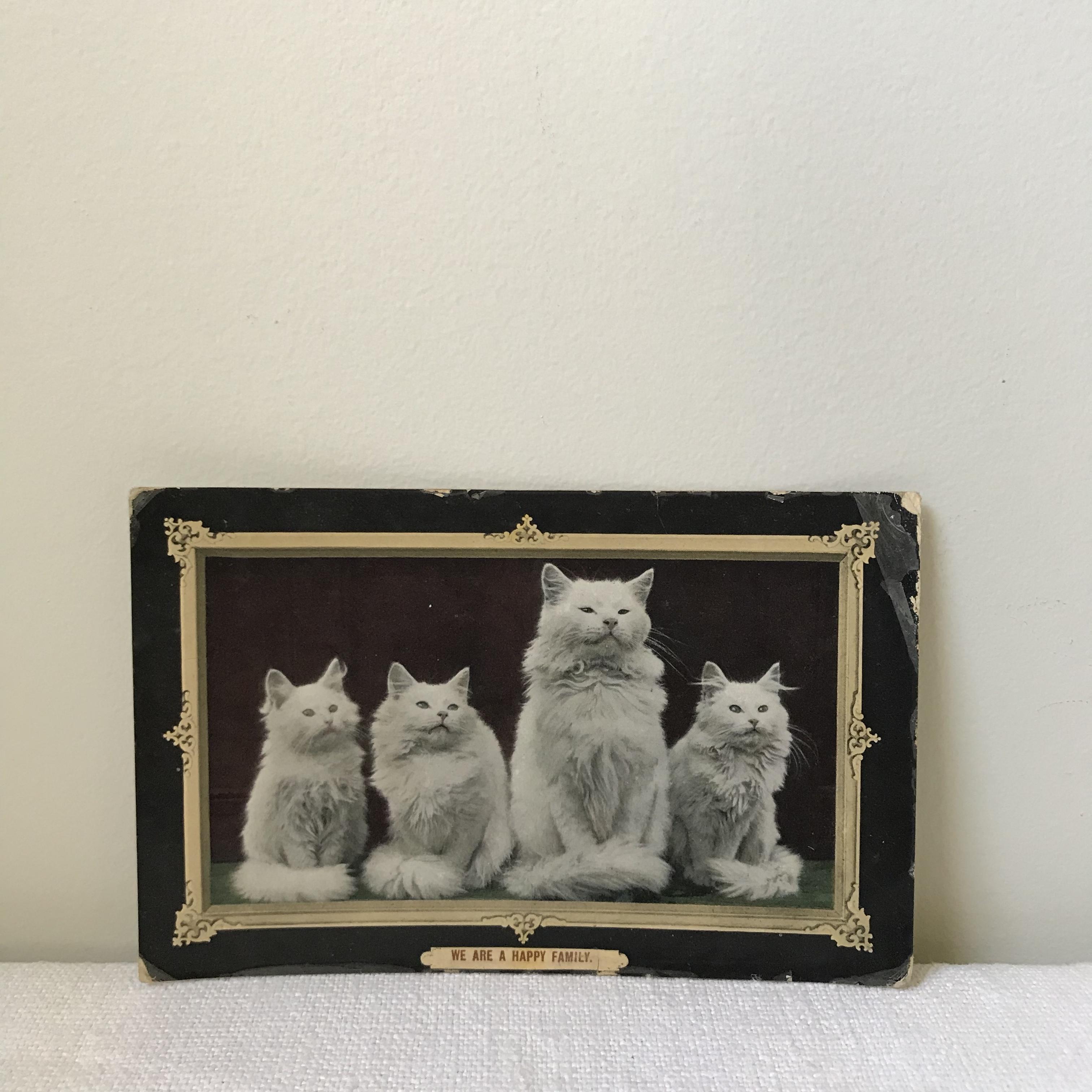 猫のポストカード6