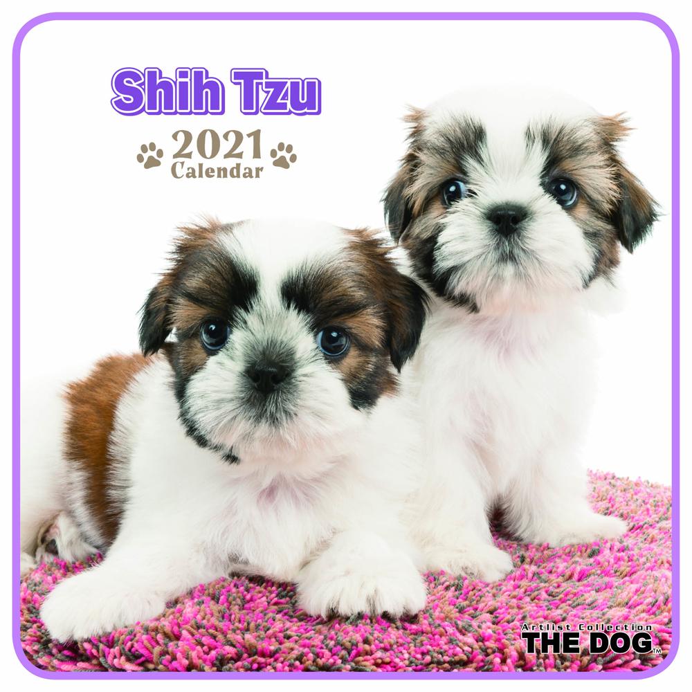 2021年 THE DOGミニカレンダー【ミニサイズ】 シー・ズー(ミニ)