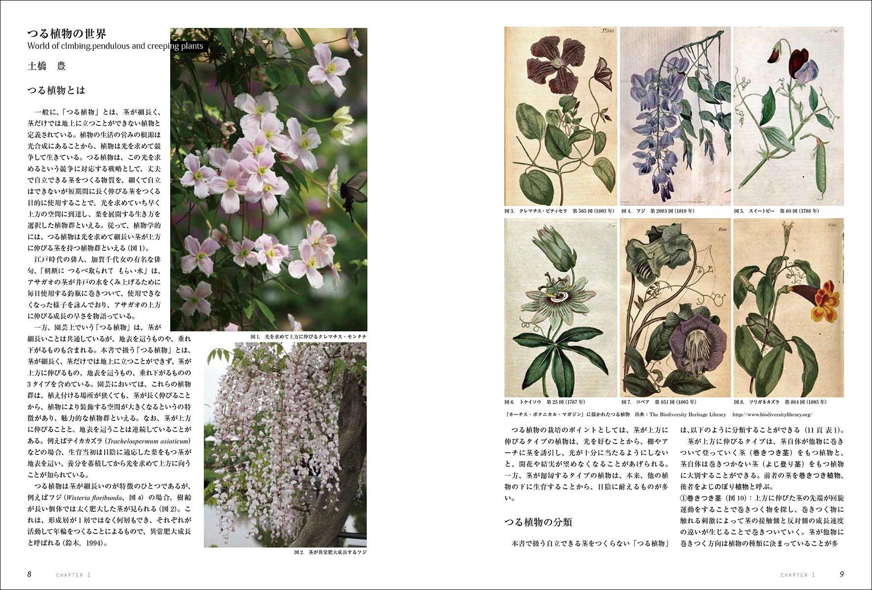[書籍]『ガーデンライフシリーズ 仕立てて楽しむつる植物: つるバラ・クレマチス・アサガオから珍しい植物まで』 - 画像3