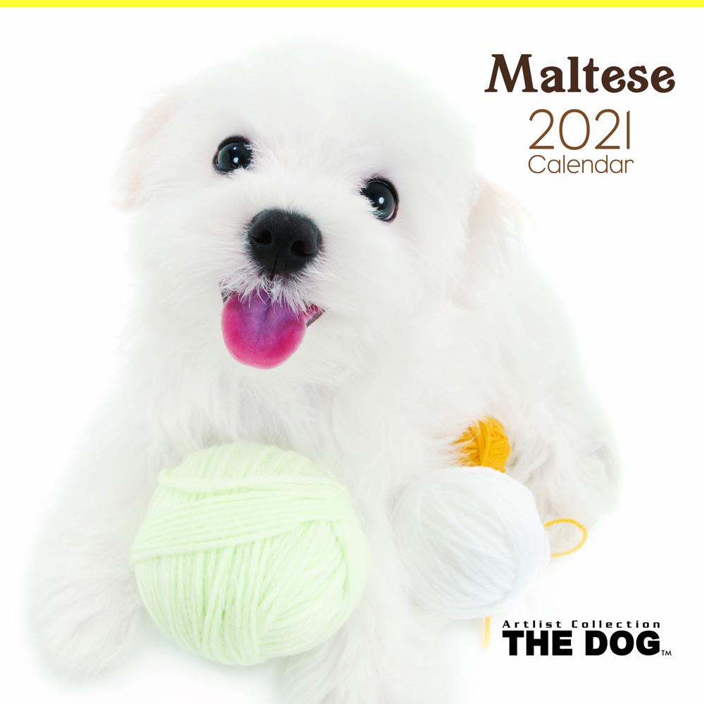 2021年 THE DOGカレンダー【大判サイズ】マルチーズ