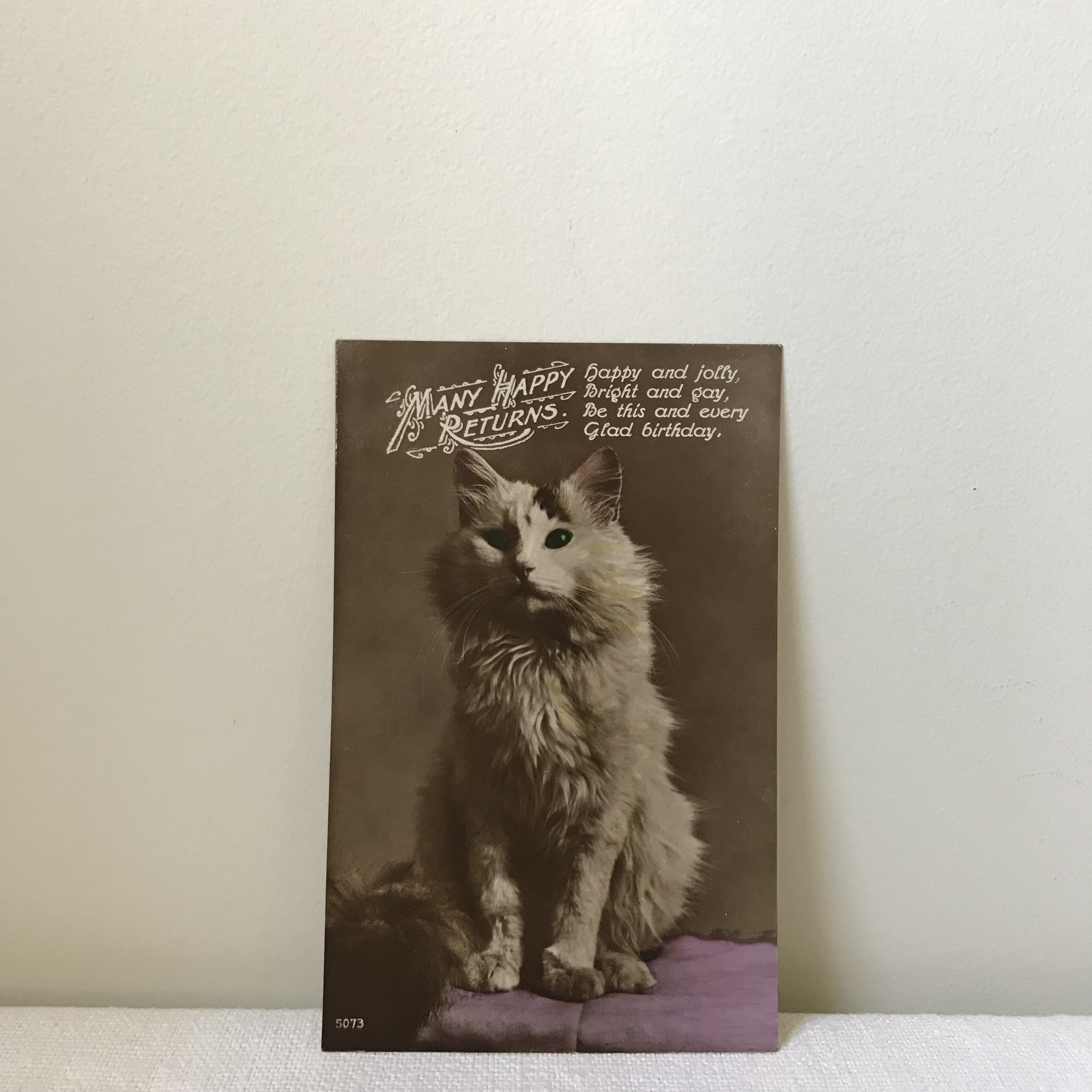 猫のポストカード8