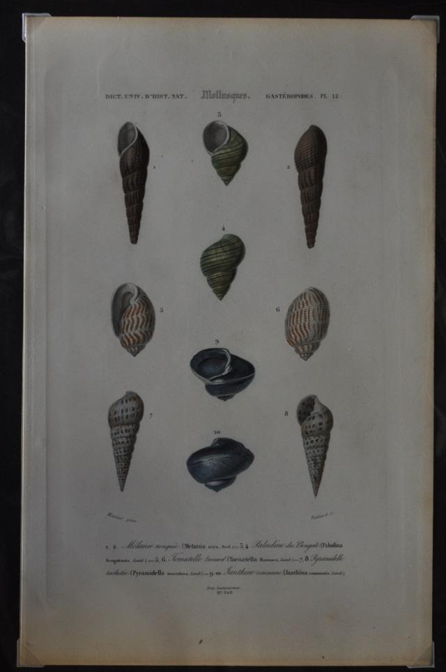 図版4(貝類2)