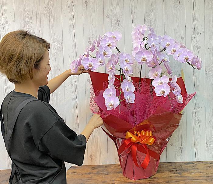 胡蝶蘭5本立ち2Lサイズ ピンク