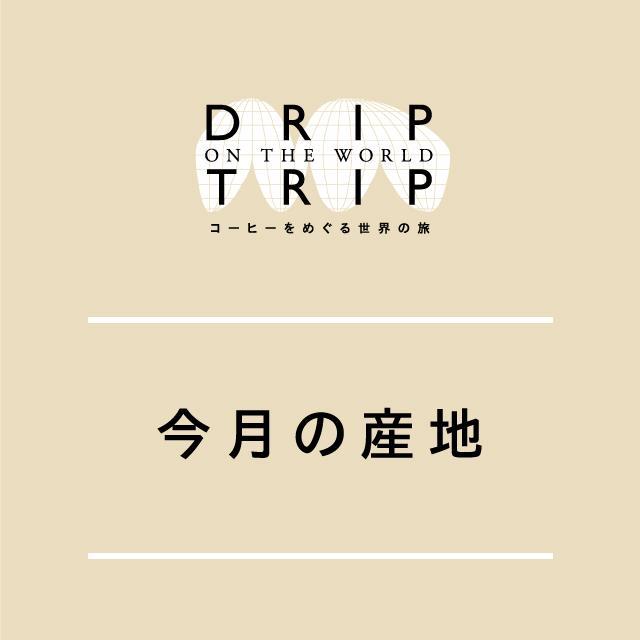 DRIP TRIP 今月の産地・ブラジル! 200g(クリックポスト対応)