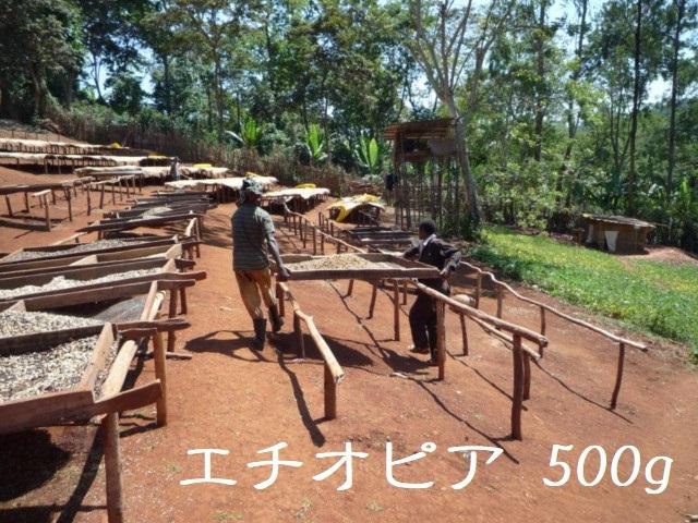 エチオピア イルガチェフェ コンガ 浅煎り 500g