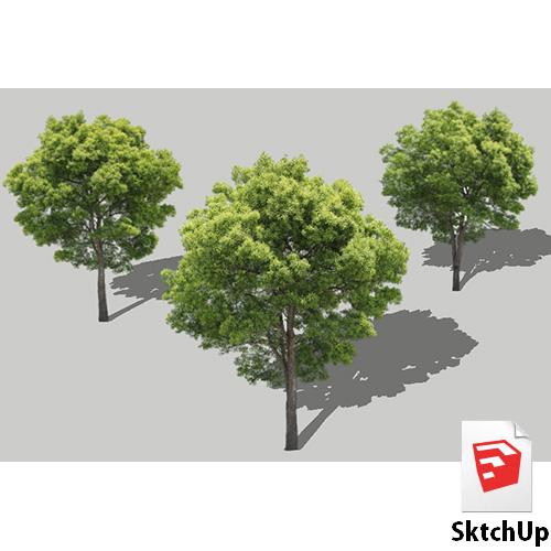 樹木SketchUp 4t_001 - 画像1