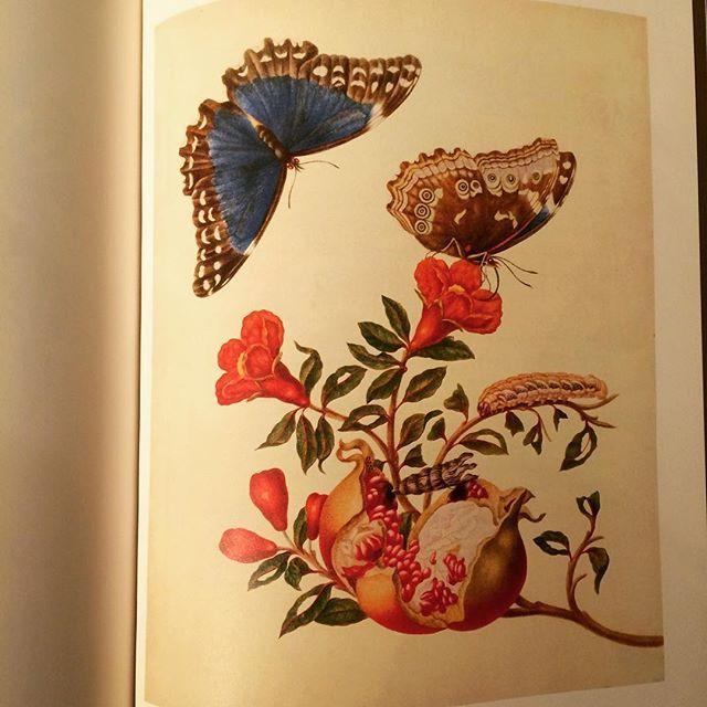 画集「The St. Petersburg Watercolours/Maria Sibylla Merian」 - 画像2