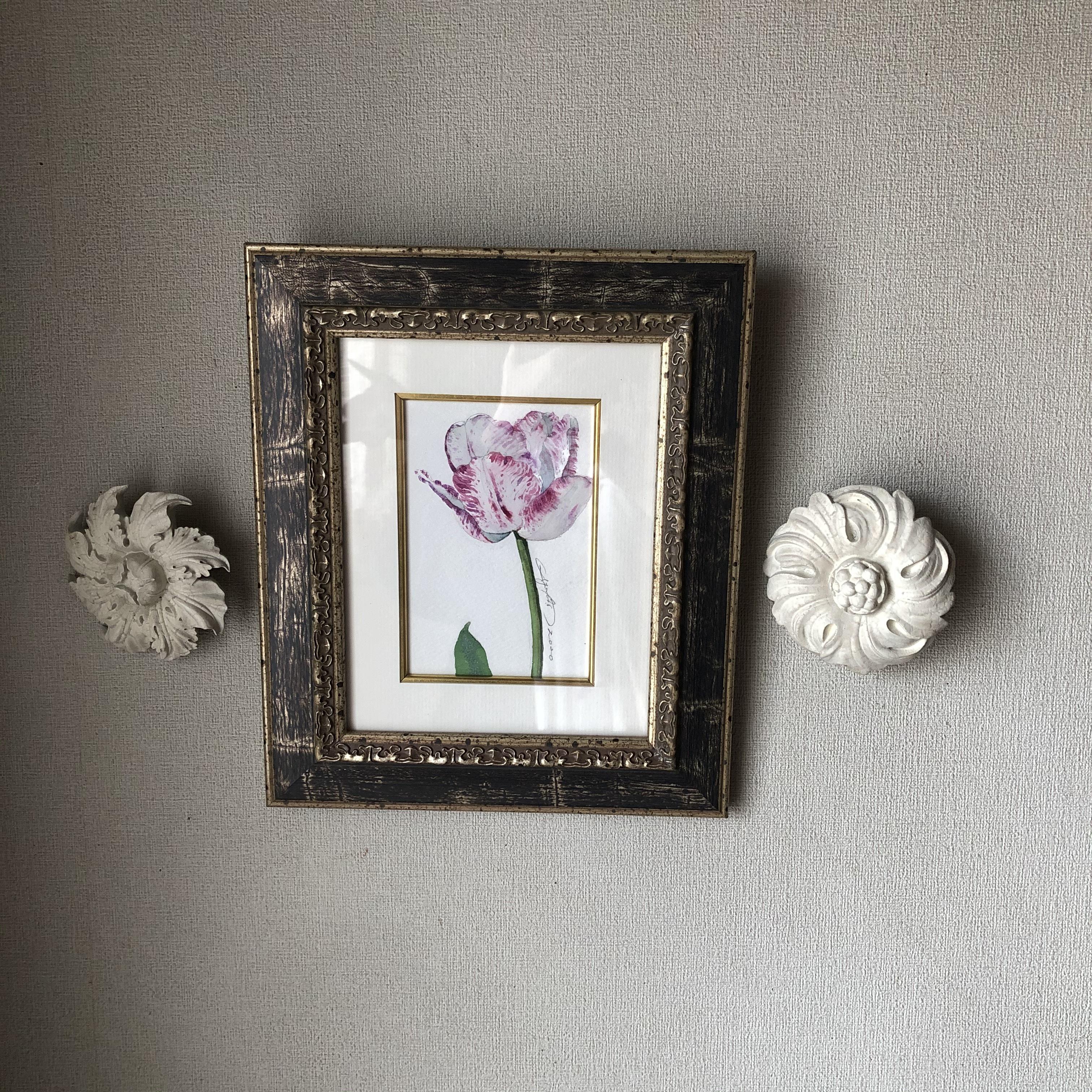 チューリップ「紫雲Ⅱ」はがきサイズ