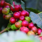 【Specialty Coffee】100g kenya AA
