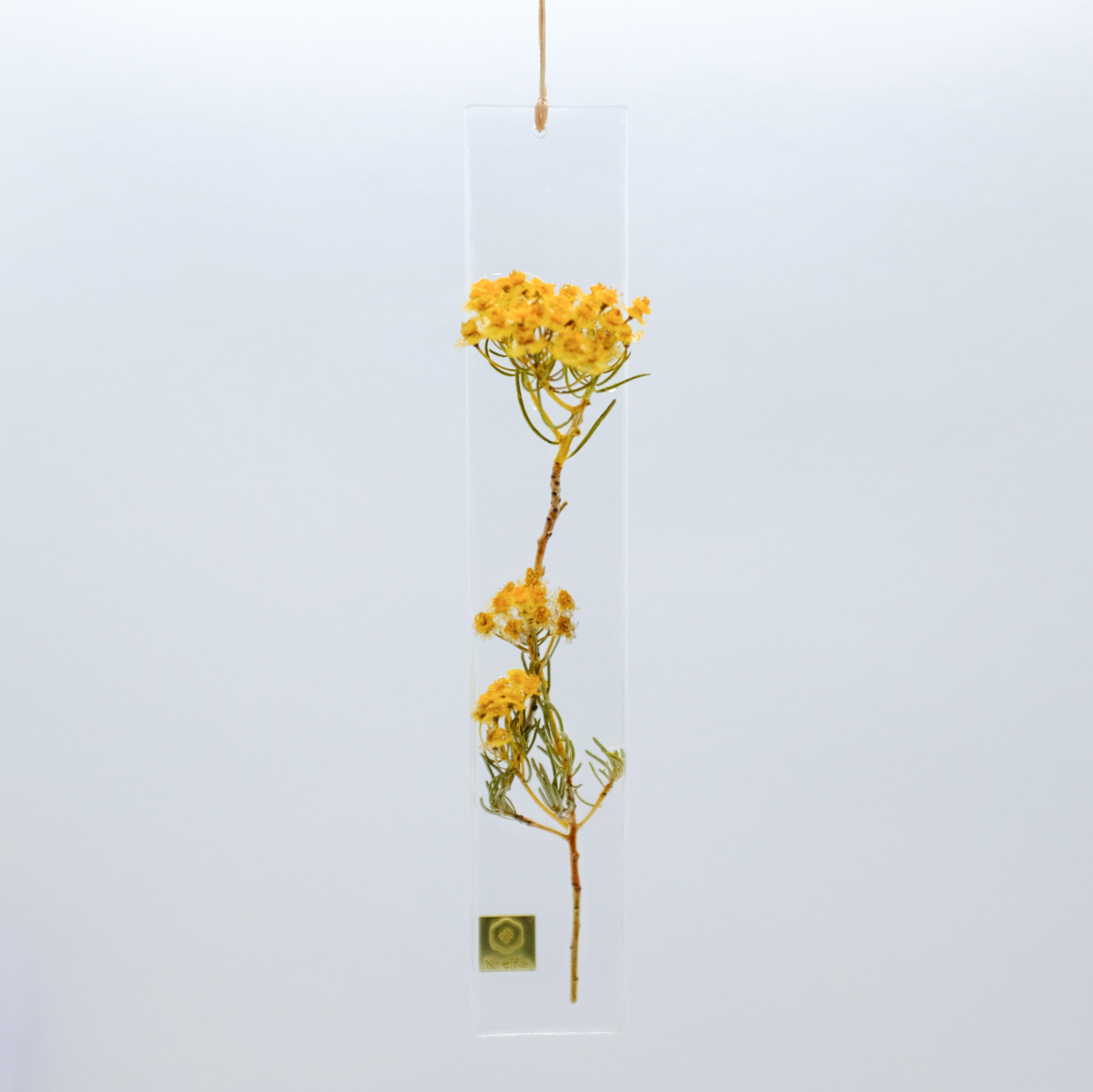 dried flower S ベルティコルディア