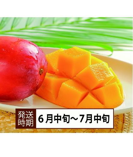 【コロナ緊急支援】沖縄県西表島産 アップルマンゴー 「900g」