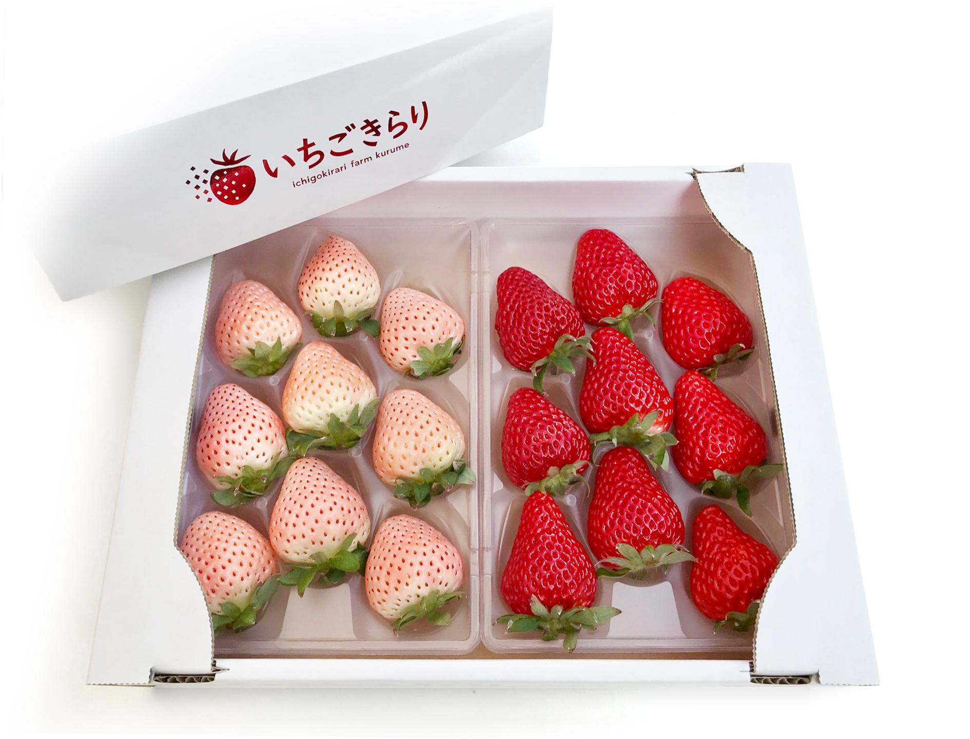 白いちご淡雪×旬のいちご(一箱)