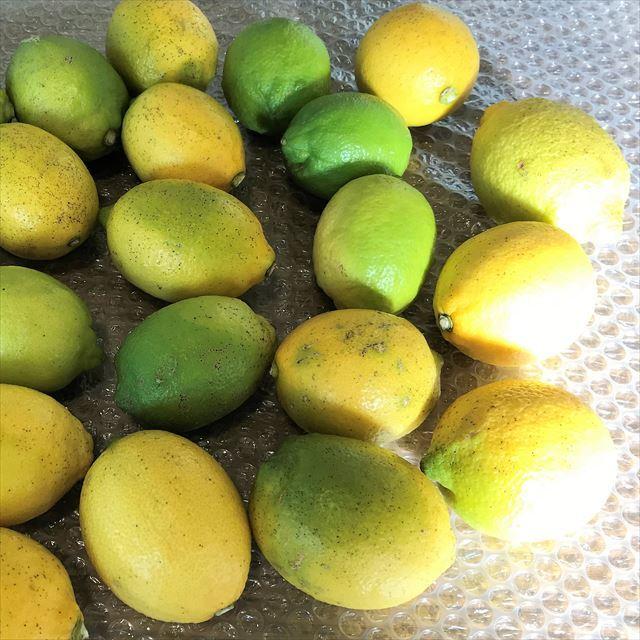 愛媛県・岩城島の農薬不使用「レモン」