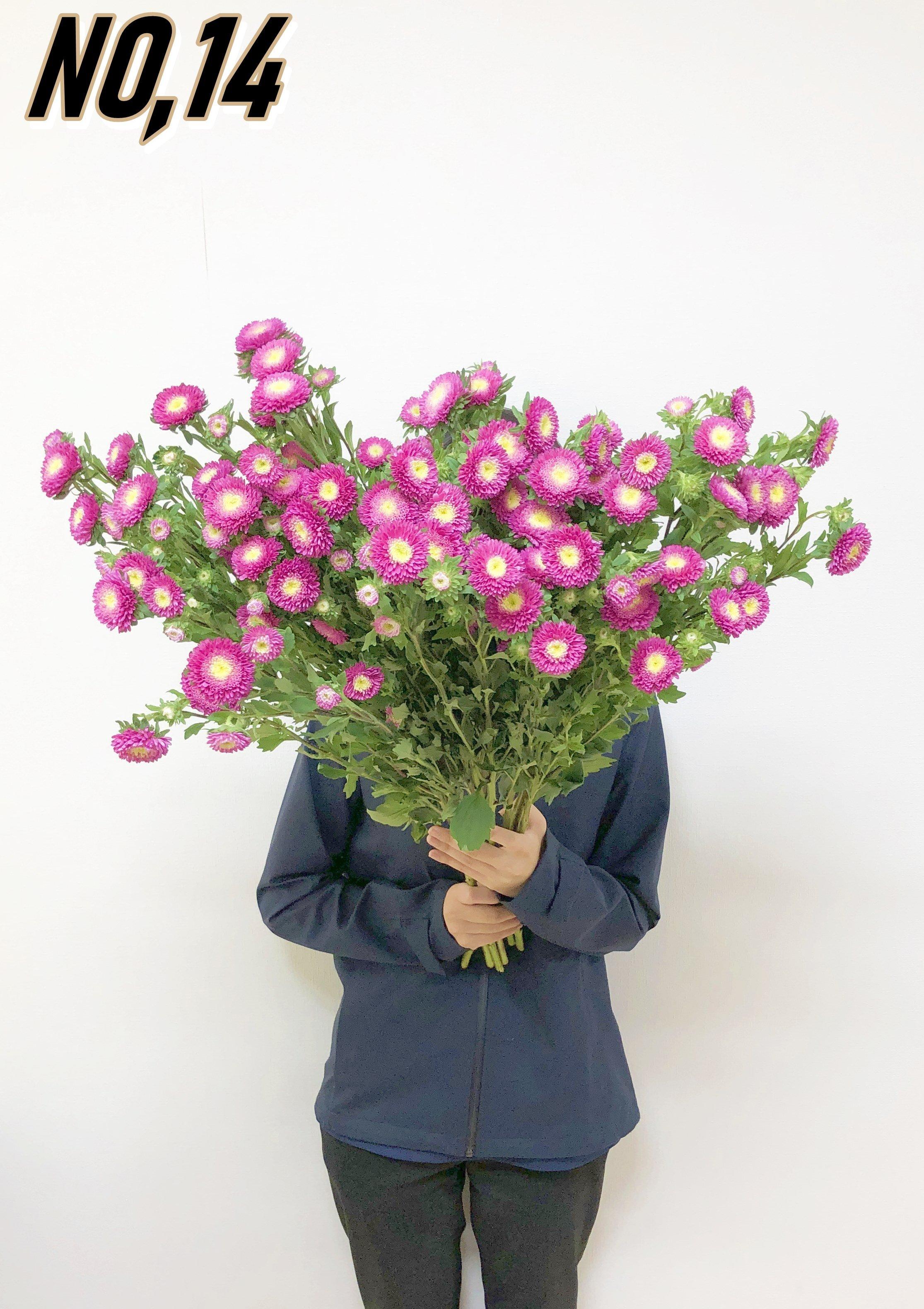 ★送料無料 お墓参りへ行こう!国産お供え花シェアBOX50 №7【ロスフラワー救済!】