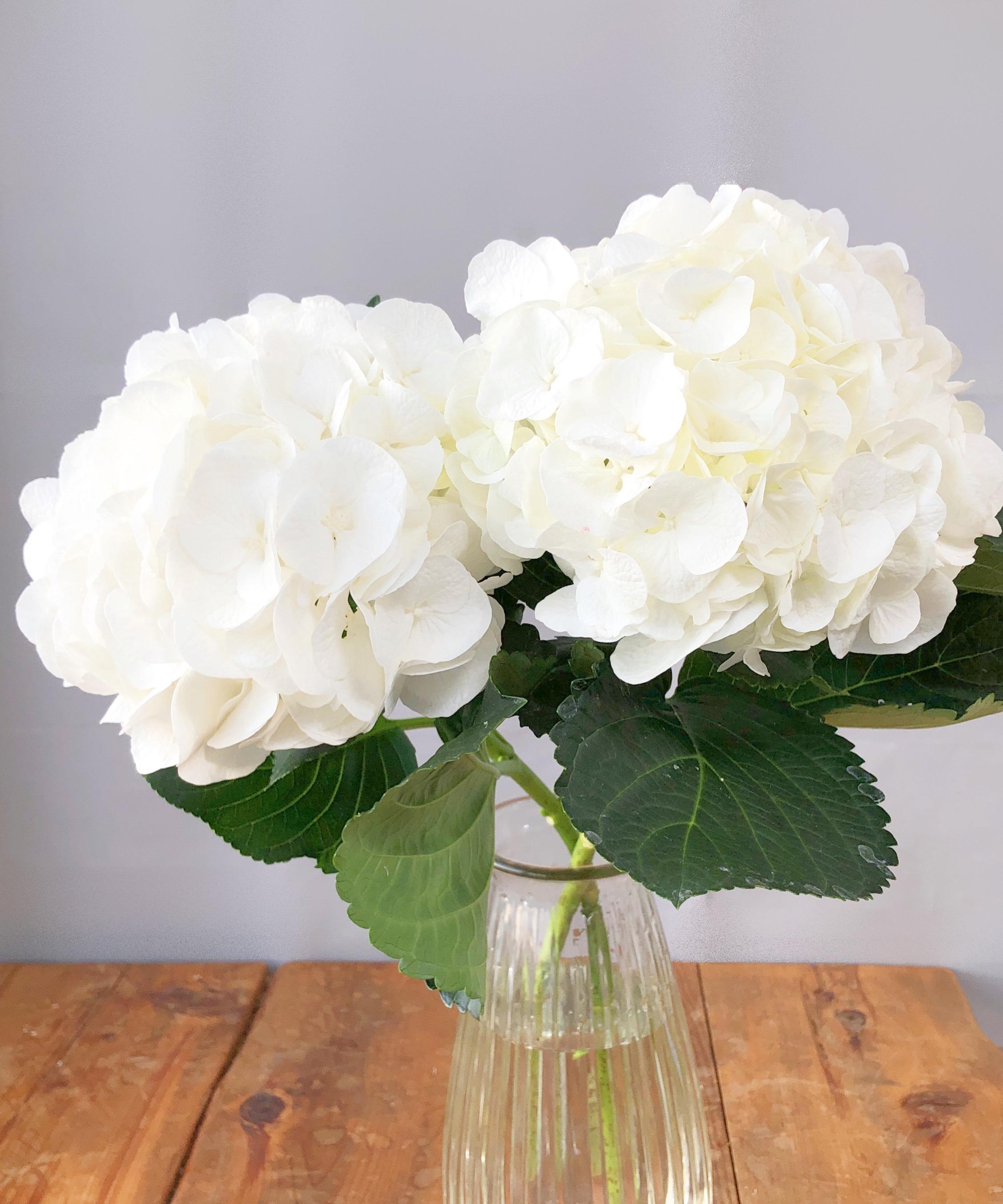 ★送料無料 ブライダル応援!! 青木園芸 ハイドランジア(アジサイ)ホワイト5本 のご提案