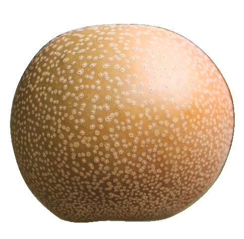 彩玉 3kg(4~5個)