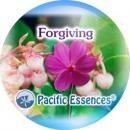 フォーギビング[Forgiving]『許し』