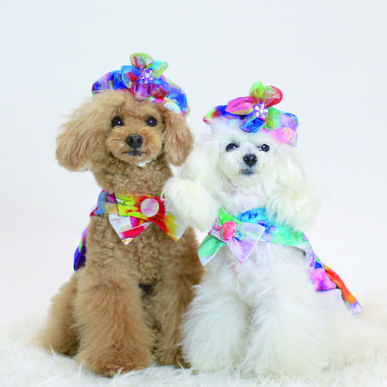 jibun-fuku DOG【ベレー】DOGHBE2018116