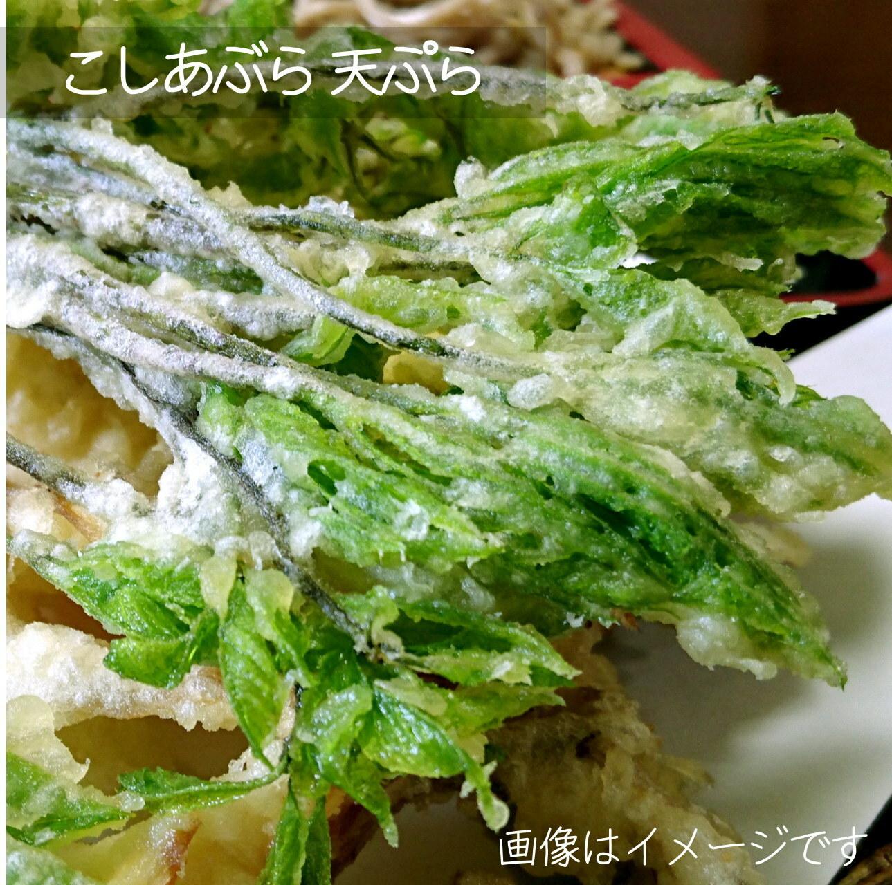 4月の山菜 こしあぶら 約50g 朝採り直売野菜 4月27日発送予定