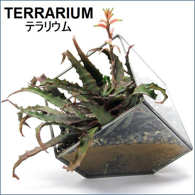 テラリウム用ガラスケース S