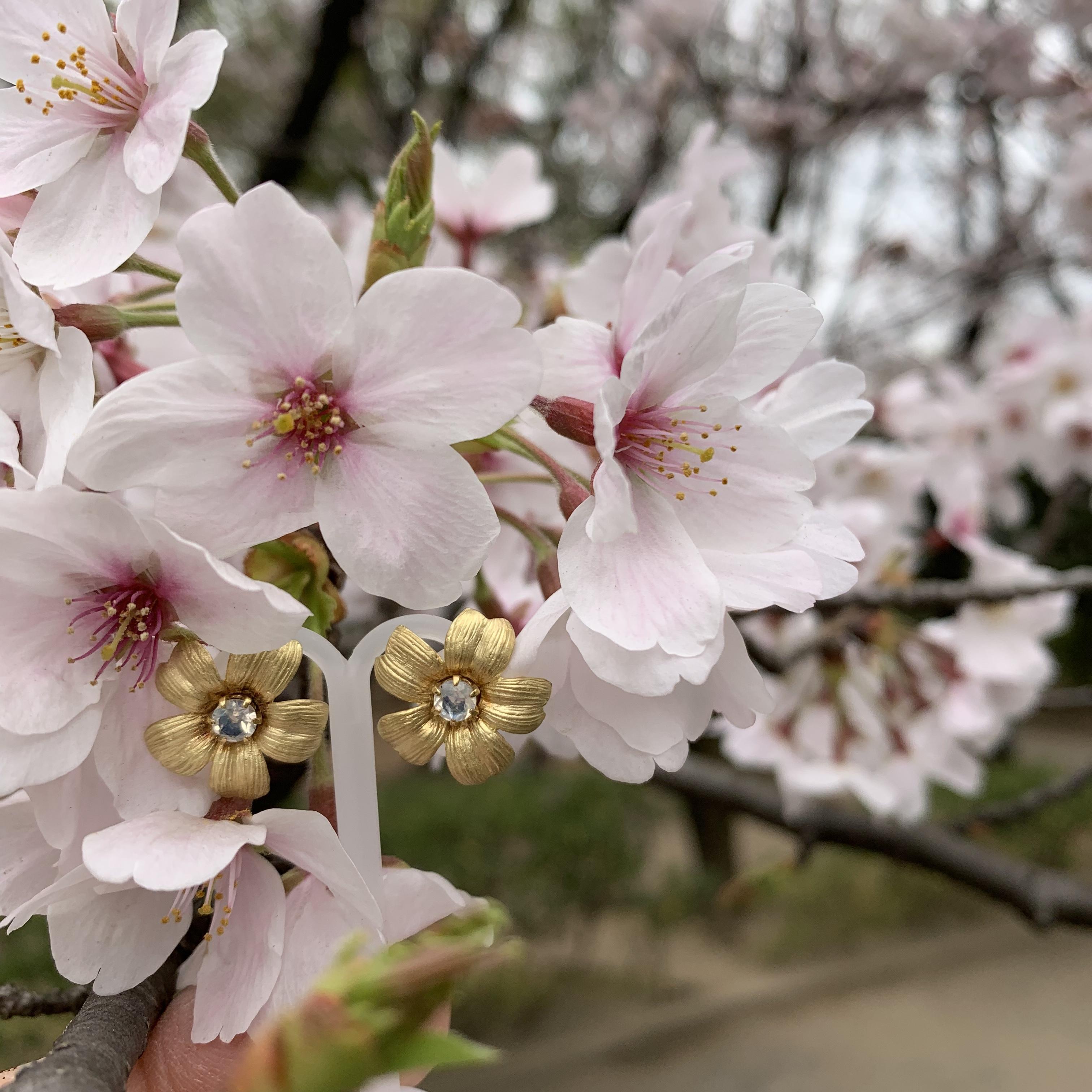 さくらの花のムーンストーンピアス