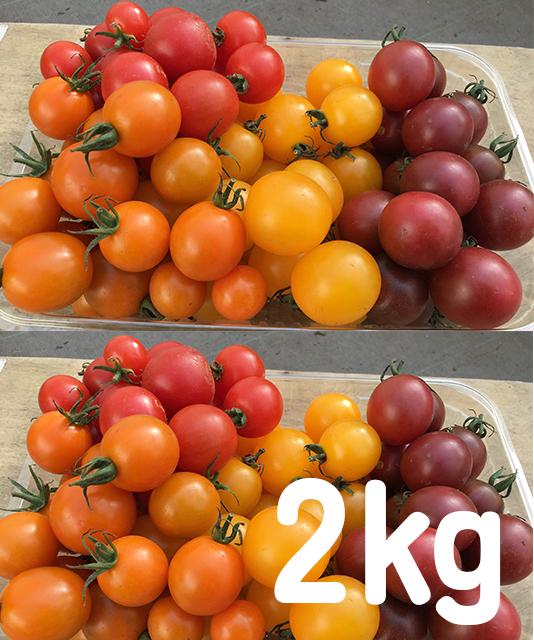 有機無農薬栽培 カラフルミニトマトShiki 2kg ササベジ 送料無料