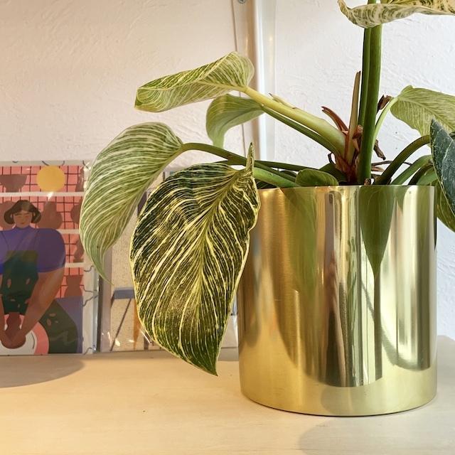 Raakel Cylinder φ15cm×h15cm gold  植木鉢カバー