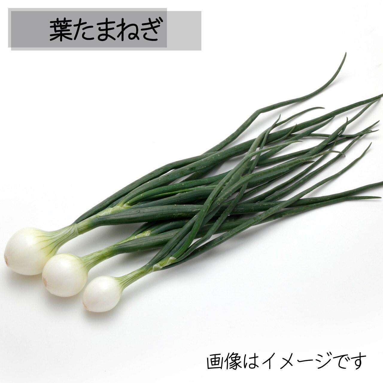 5月の朝採り直売野菜:葉たまねぎ 3~4本 春の新鮮野菜 5月18日発送予定