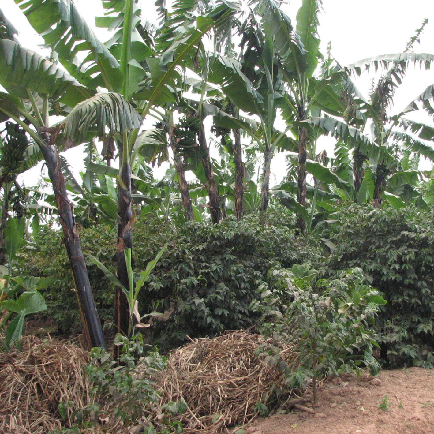 タンザニア キゴマ地区 150g