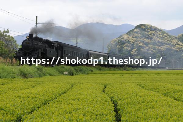 大井川鐵道・C10と緑_DSC6862