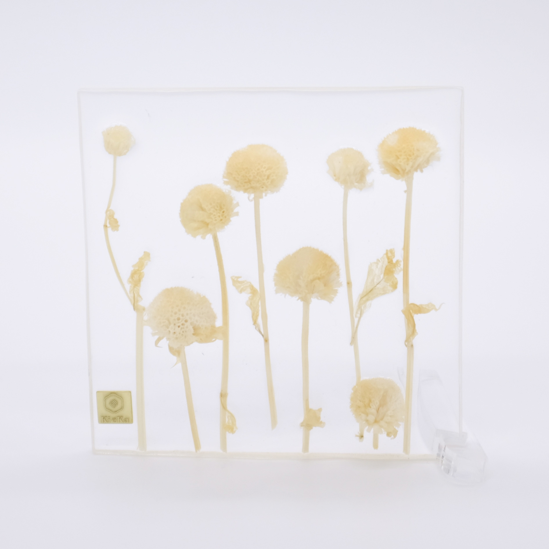dried flower square モナルダ