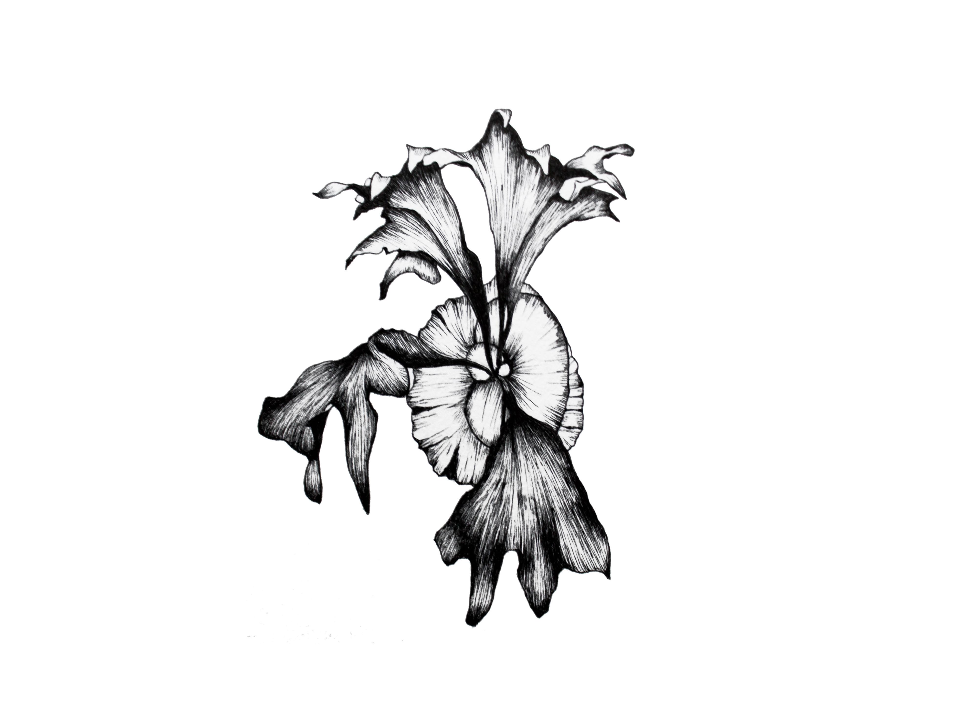 Platycerium ellisii 原画作品