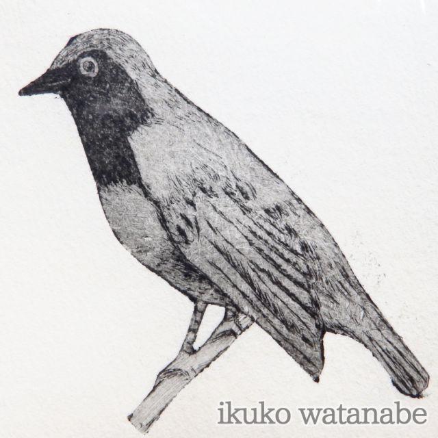 版画カード - トリ - わたなべいくこ - no6-wat-02