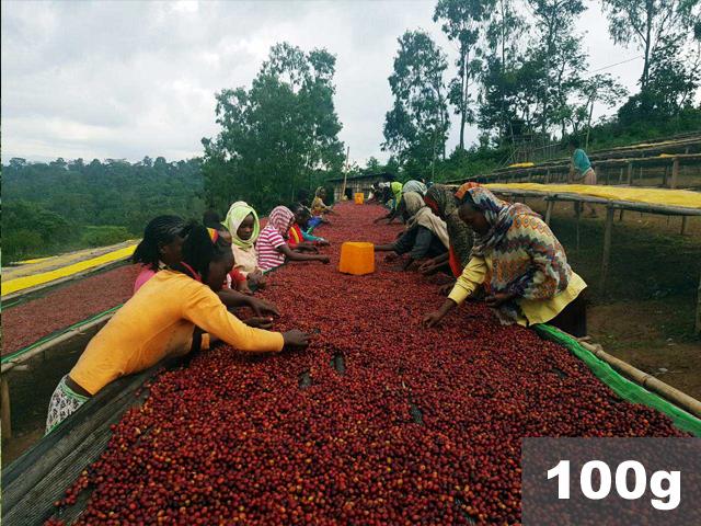エチオピア   イルガチェフ ハルスケ  ナチュラル   コーヒー豆100g