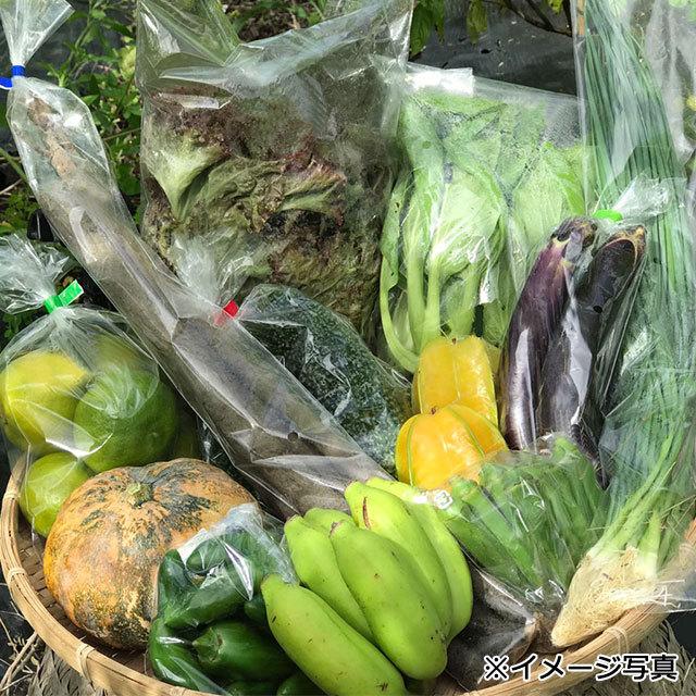 【定期便(12回)】沖縄産無農薬野菜セット(S) - 画像1