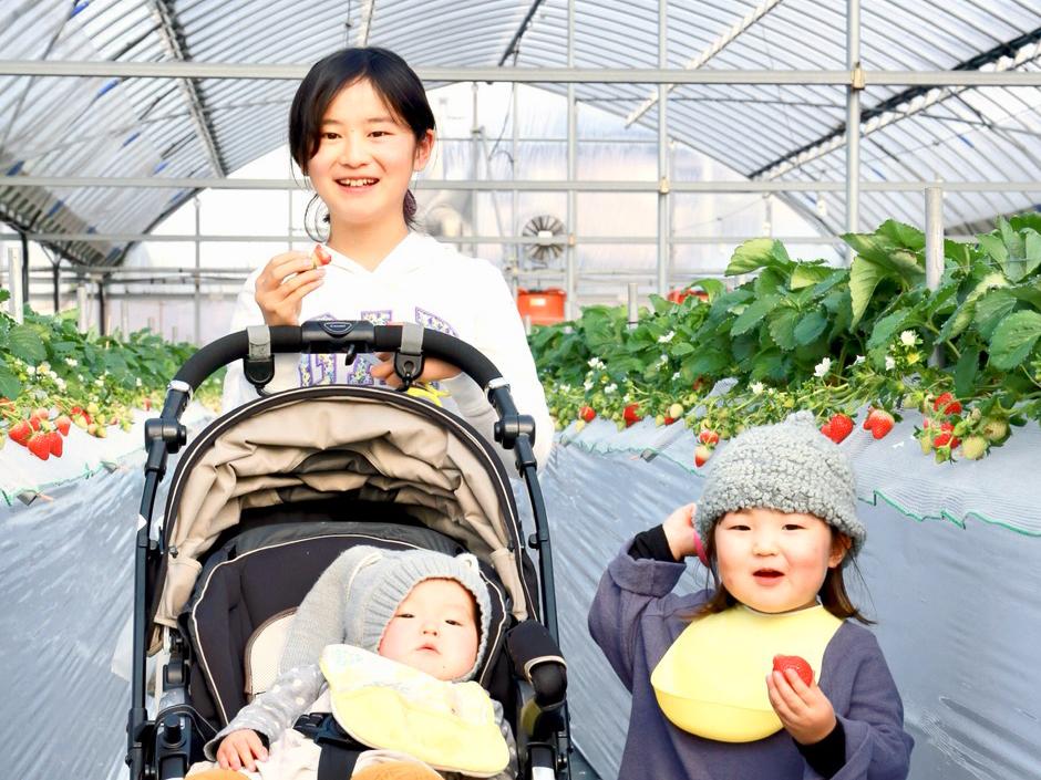 冷凍いちご(淡雪)1kg  お菓子、ジャム作りに最適!