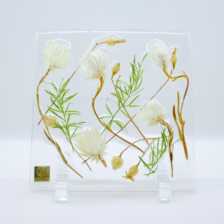 dried flower square シルバーデイジー+サルシーオ