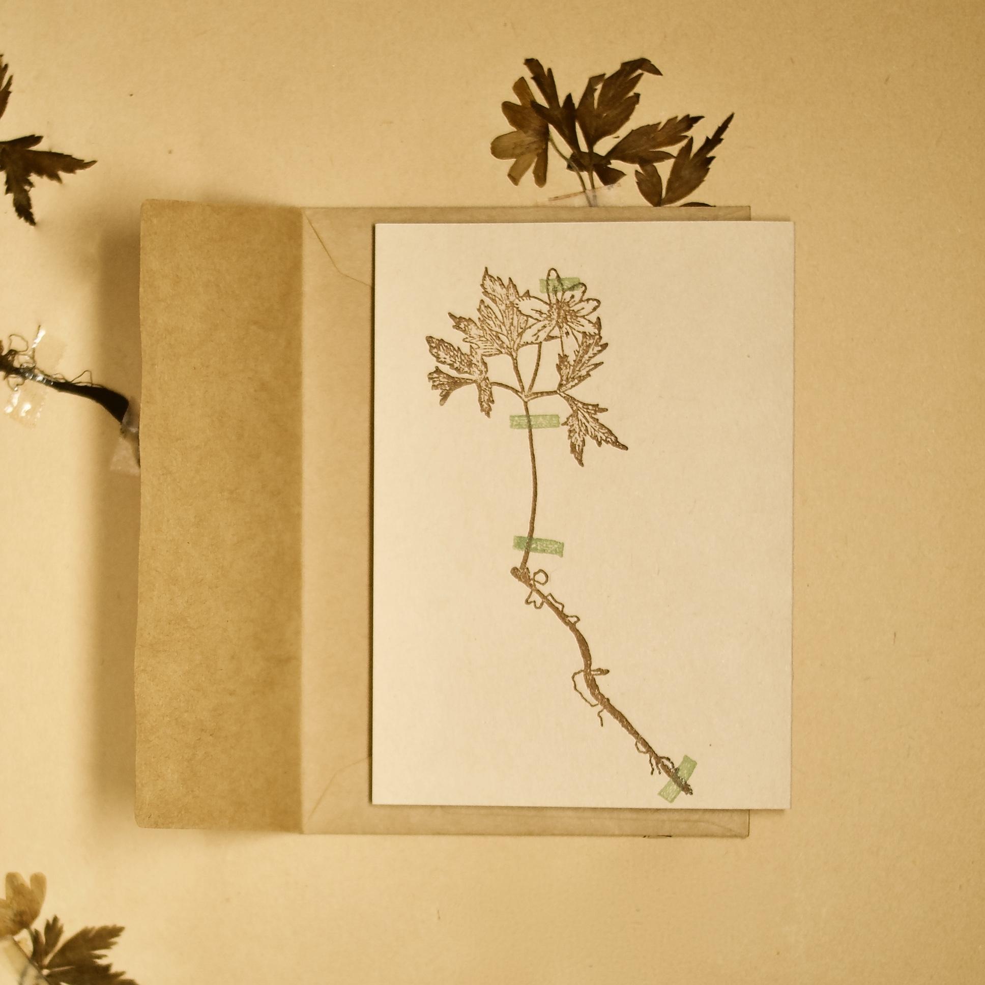 【カード 小】アンティーク押し花 アネモネ / カード1枚+封筒1枚